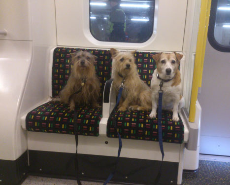 Mascotas en Metro